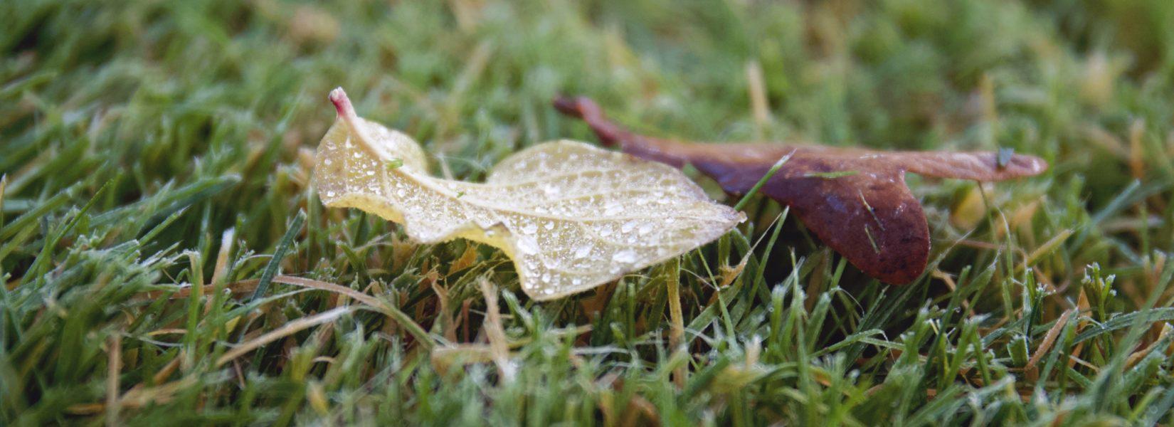 Herbst & Wunder ist zurück // Wie geht es weiter?